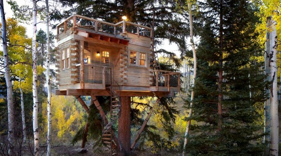 Check out some of these great Tree Forts on Houzz!