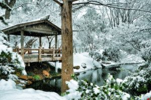 Tree Teahouse in the Snow